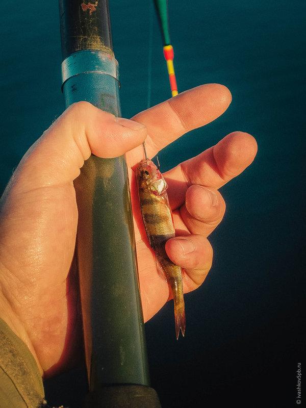 К слову, о рыбалке... - Александр Ивашков