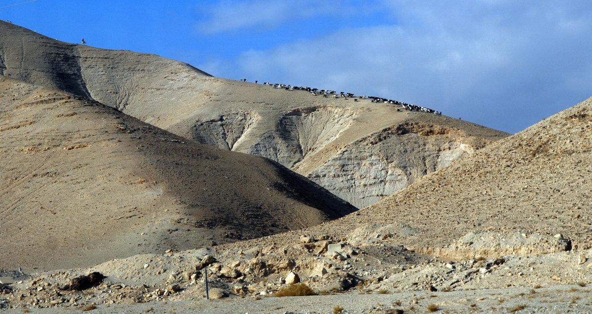Пустыня Арава. Израиль. - Надя Кушнир