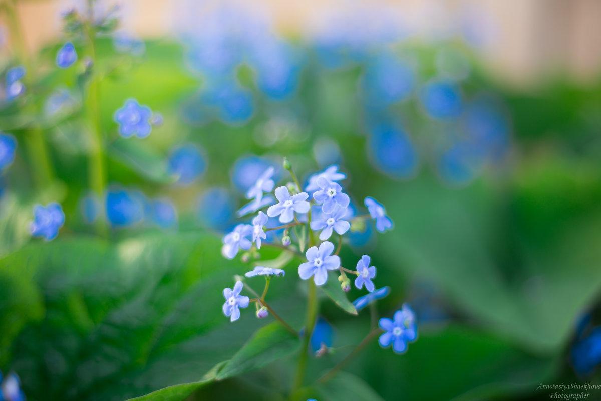 В мамином саду - Анастасия Шаехова