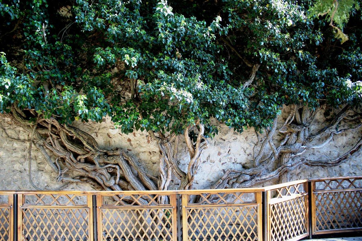 Крымская лиана. В одном из садиков Ханского дворца - Ольга Иргит