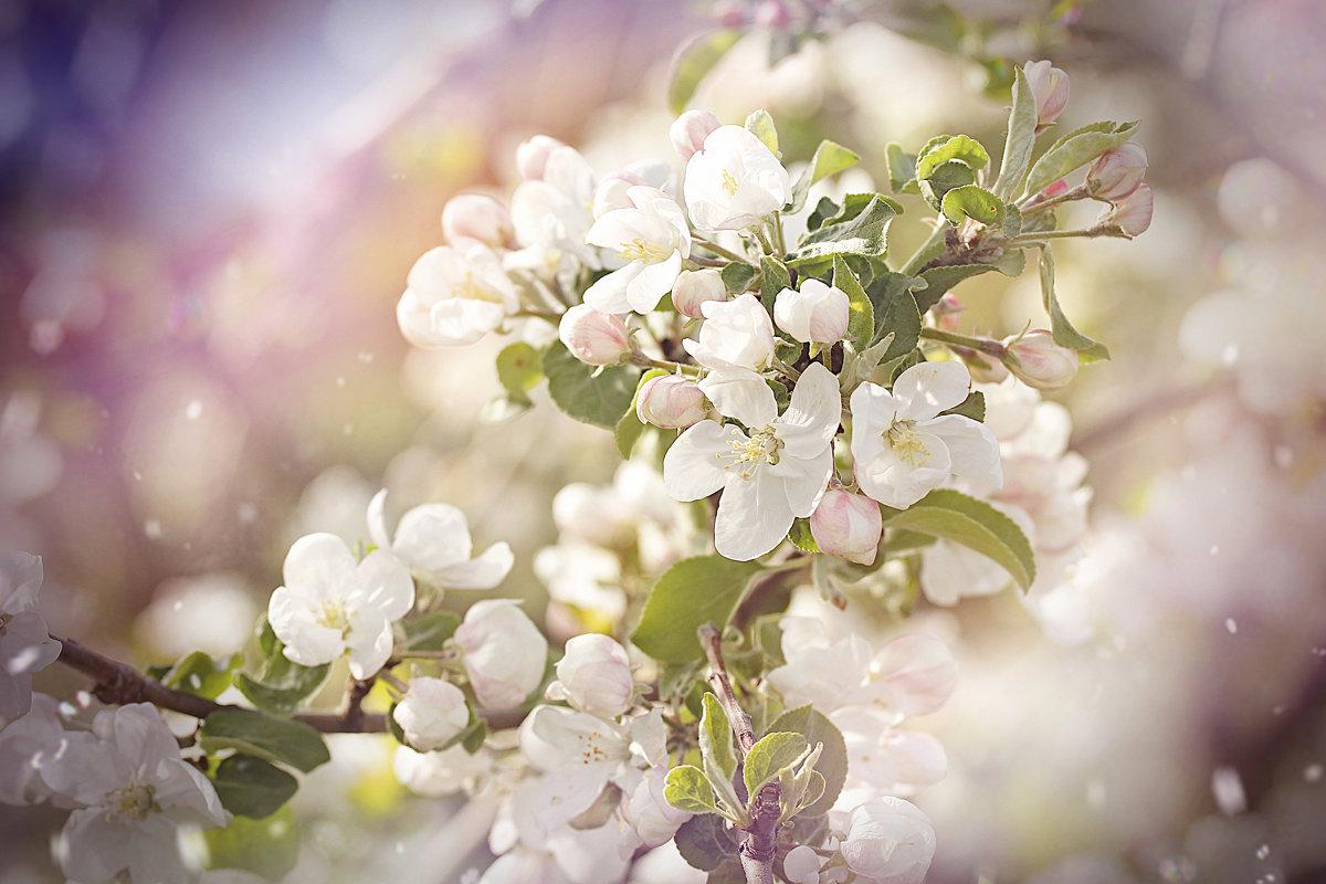 Весна - Ольга