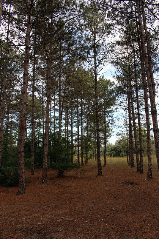 Forest - Dmitriy Photo
