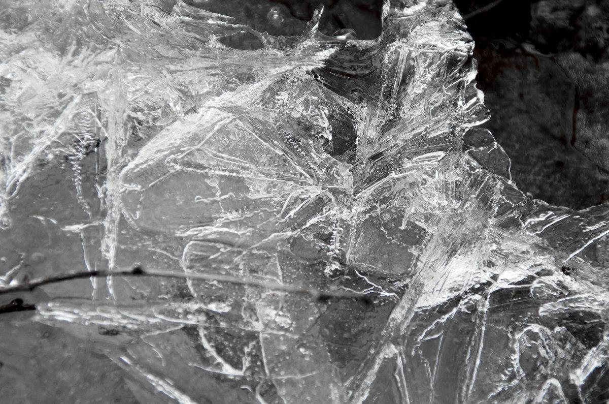 Лед в луже - Виктория Большагина