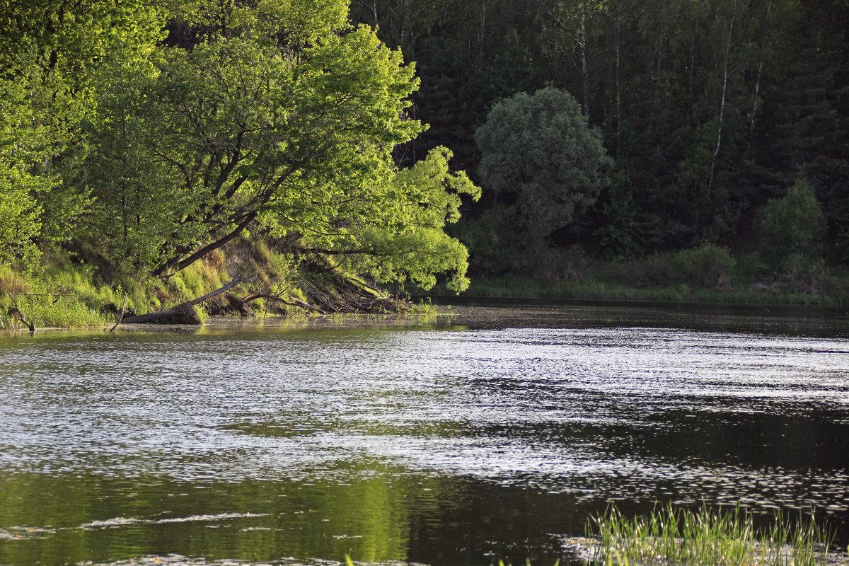 склоняясь над рекой - оксана