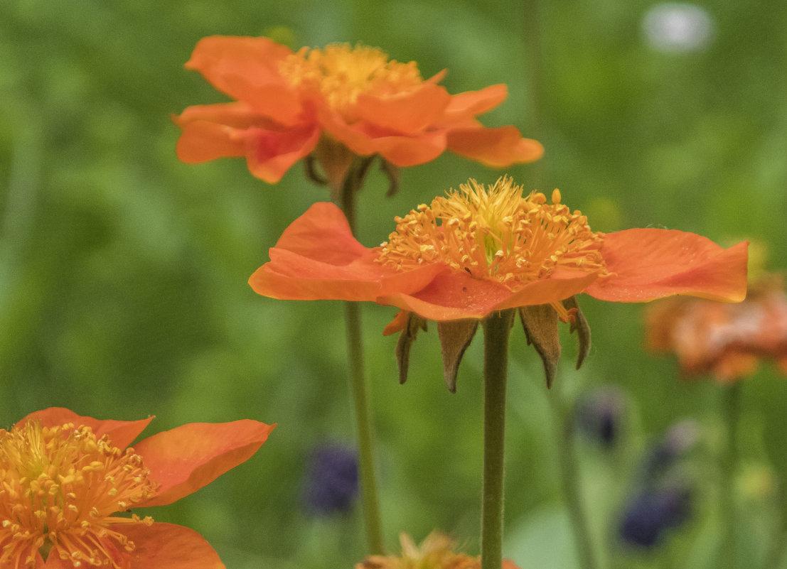 весенние цветочки - Лариса Батурова
