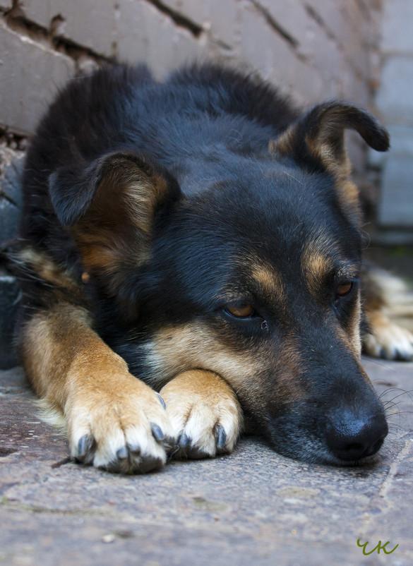 собака - юрий мотырев