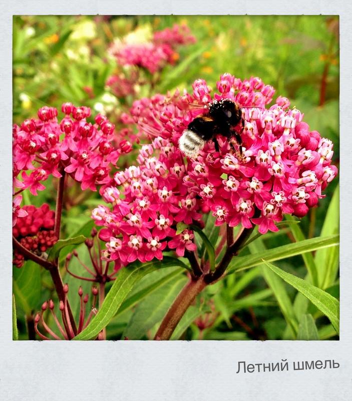 Летний шмель - Иван Носов