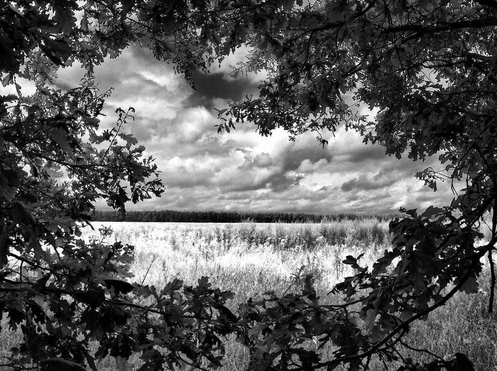 в дубовых листьях - Pavel Stolyar