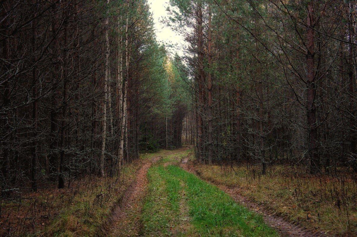 Дорога из мрачного леса... - марк