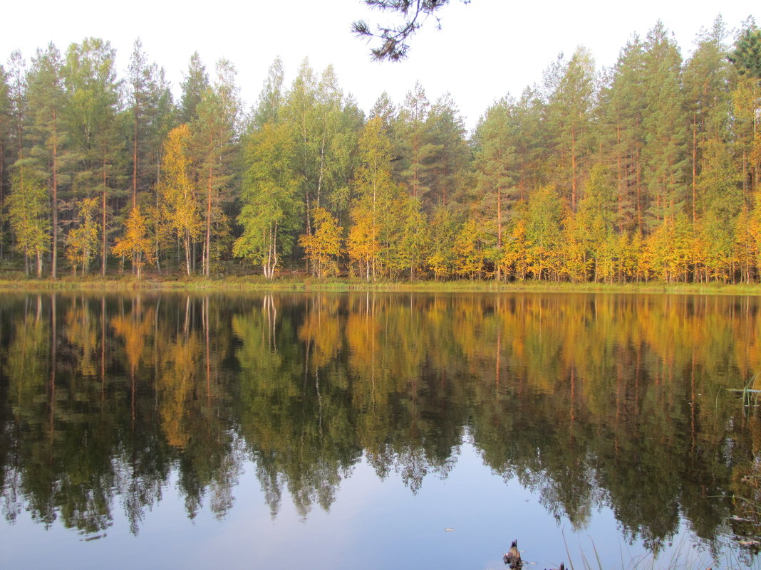 озеро - Галина