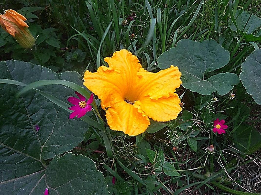 Цветок декоративной тыквы - Маргарита Батырева