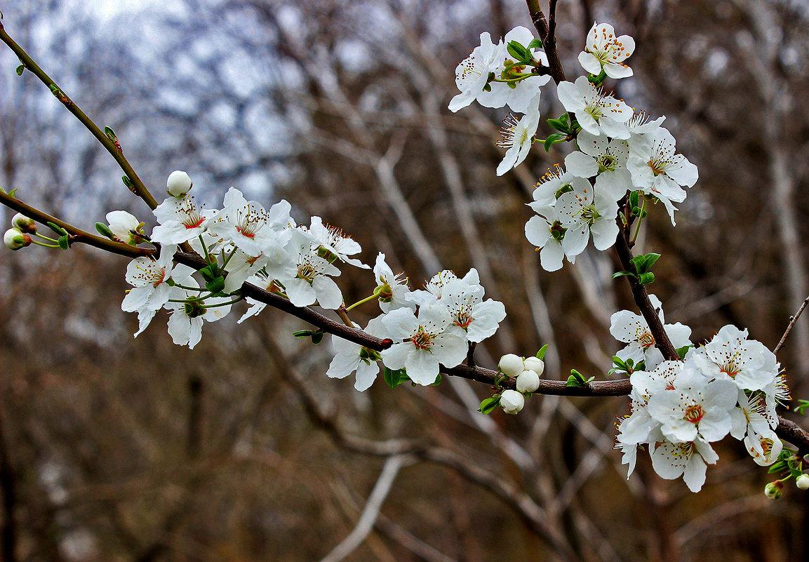 Вспоминая весну... - Светлана