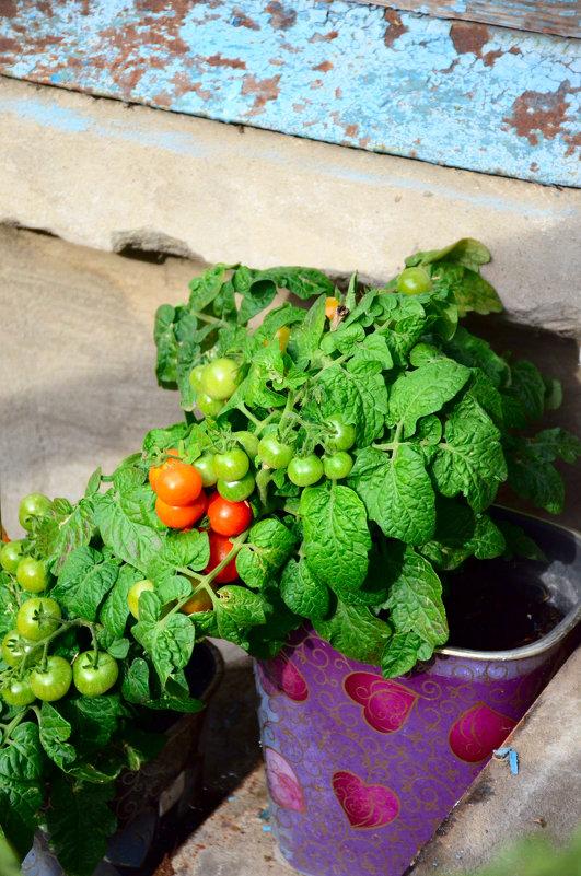Всё о сельском хозяйстве или мой огород... - Михаил Болдырев