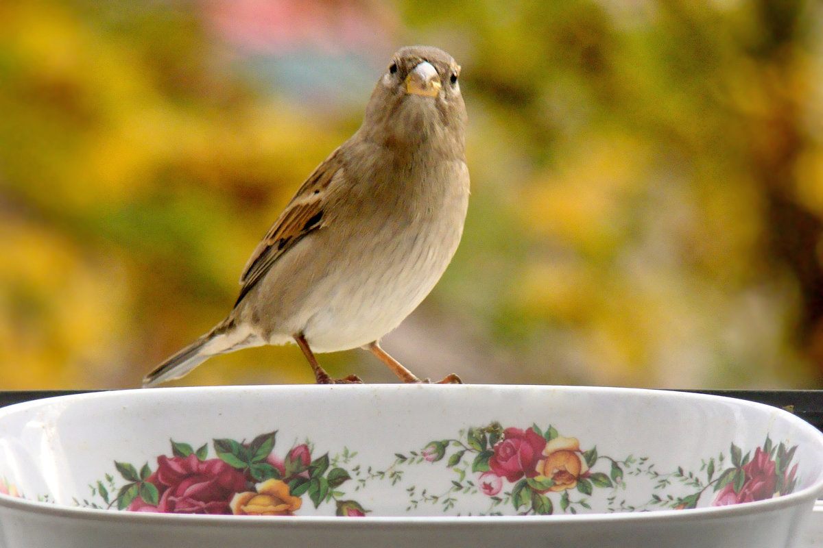 *** - linnud