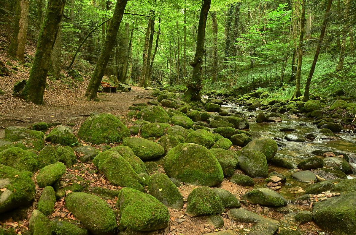 В лесу - Николай Танаев