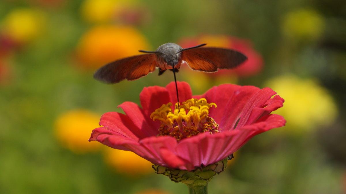 в поисках нектара - Alexandr Staroverov