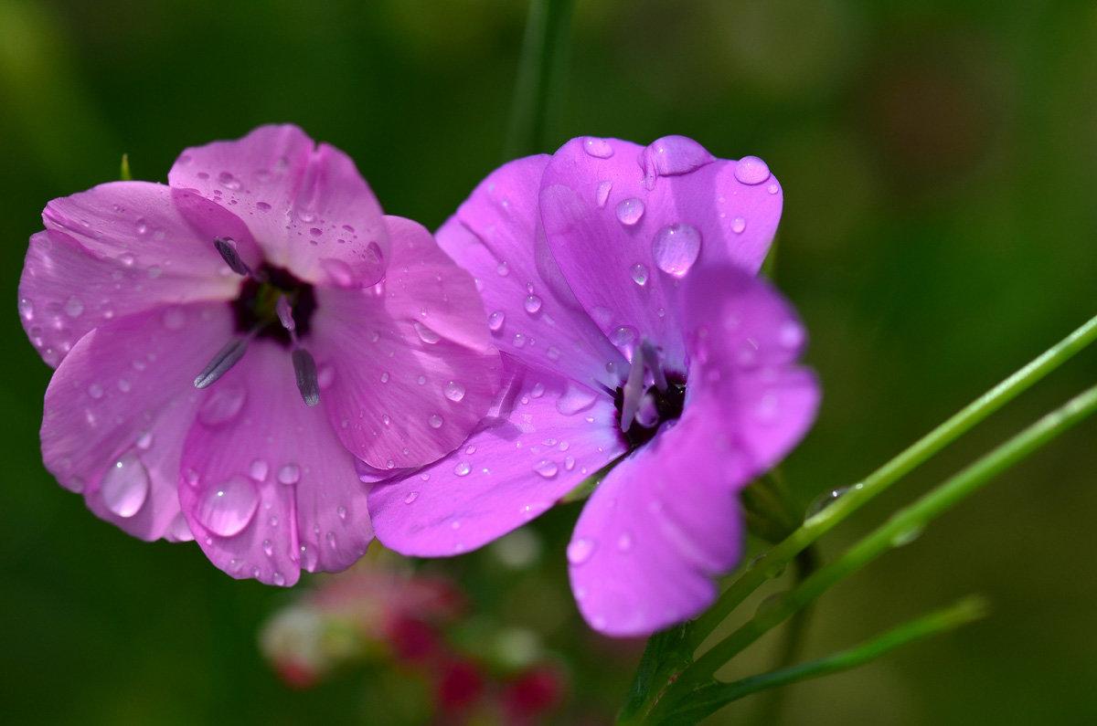 Двое под дождём - Татьяна Соловьева