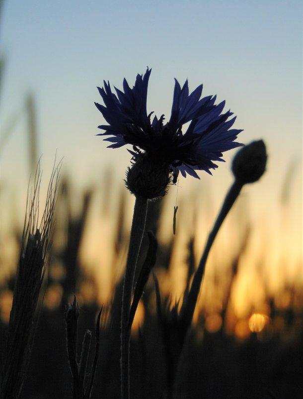 Цветок заката - spm62 Baiakhcheva Svetlana
