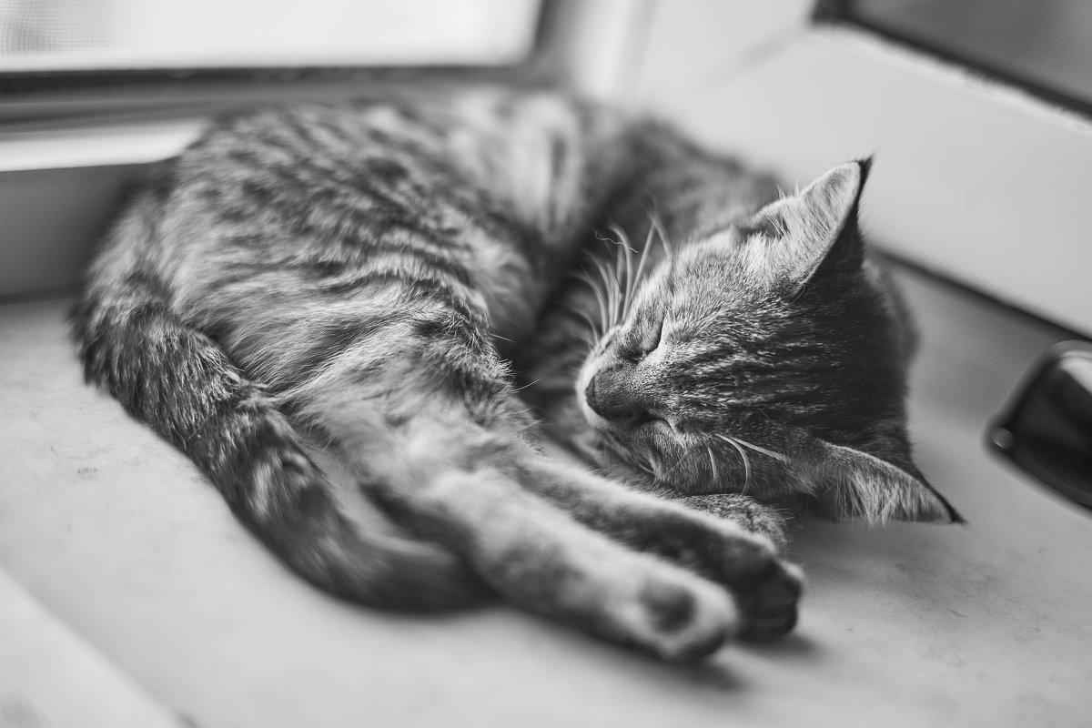 sleepyhead - Vitaliy Dankov