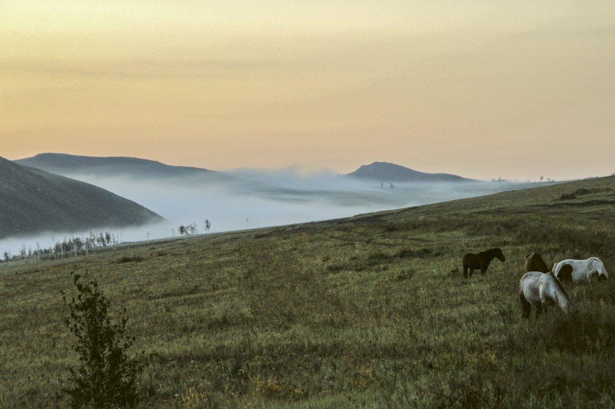 Туман, рассвет и лошади - Марина Кириллова
