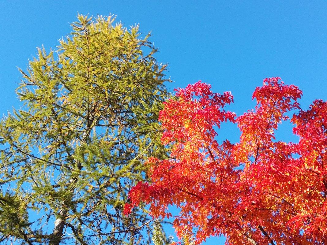 Яркие краски осени - BoxerMak Mak