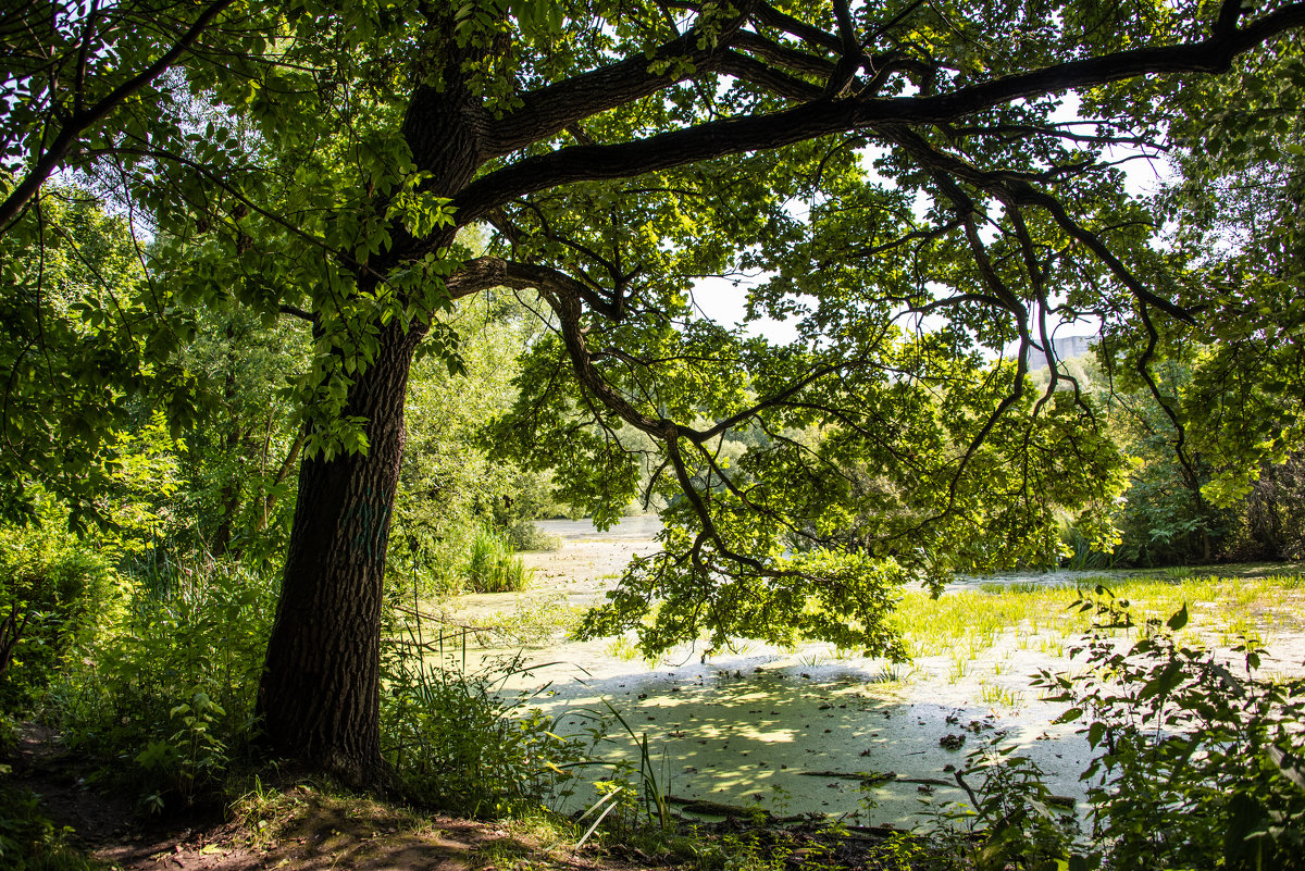 Есть в парке старый пруд... - Владимир Безбородов