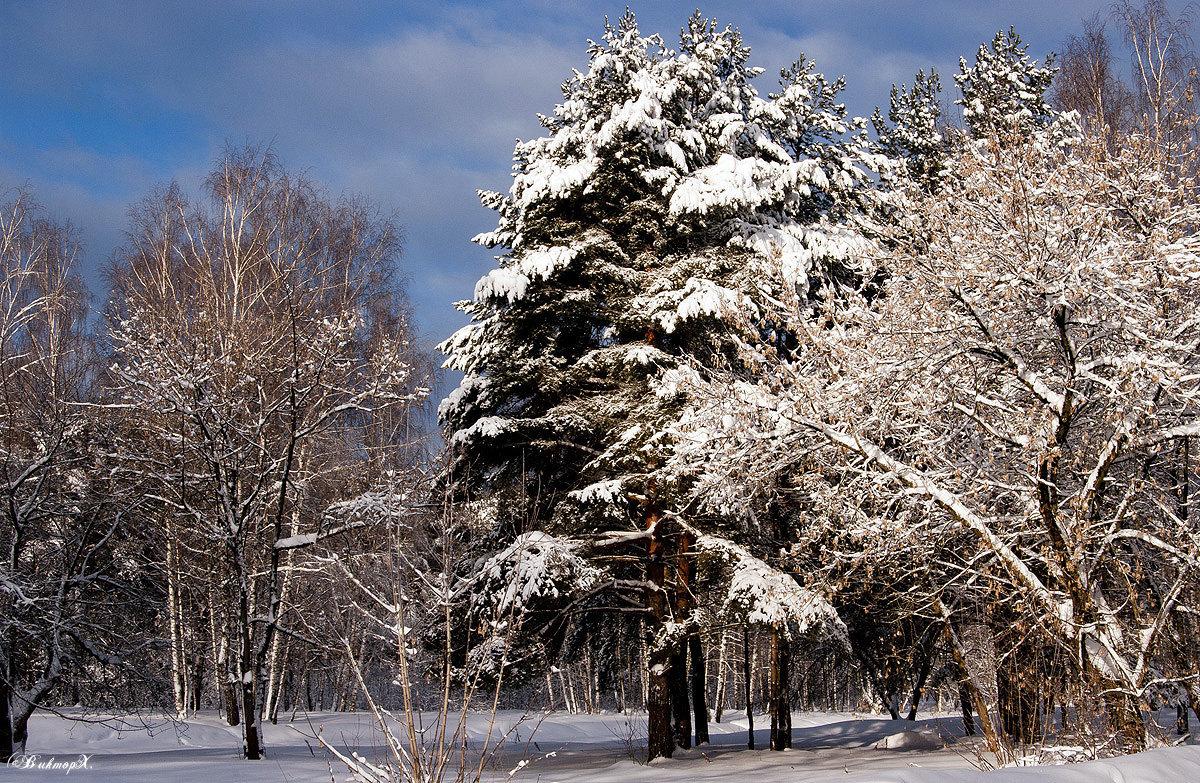 После снегопада - Виктор Х.