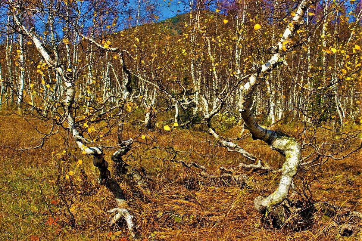 Пляшущий лес - Сергей Чиняев