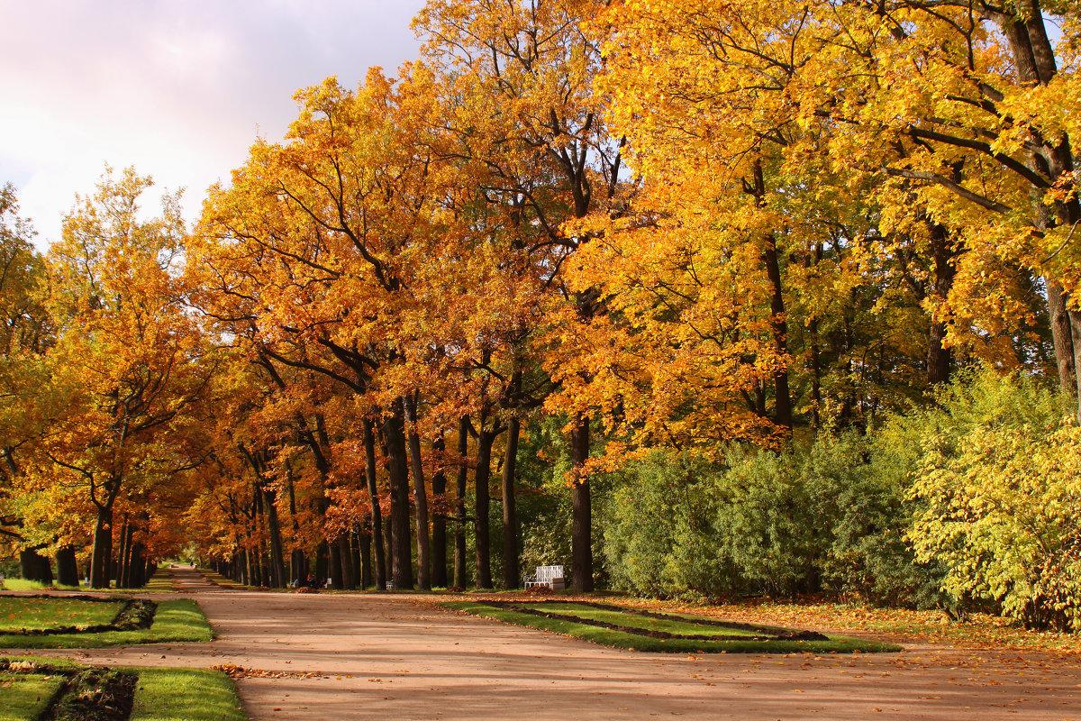 Осенний парк - Наталья