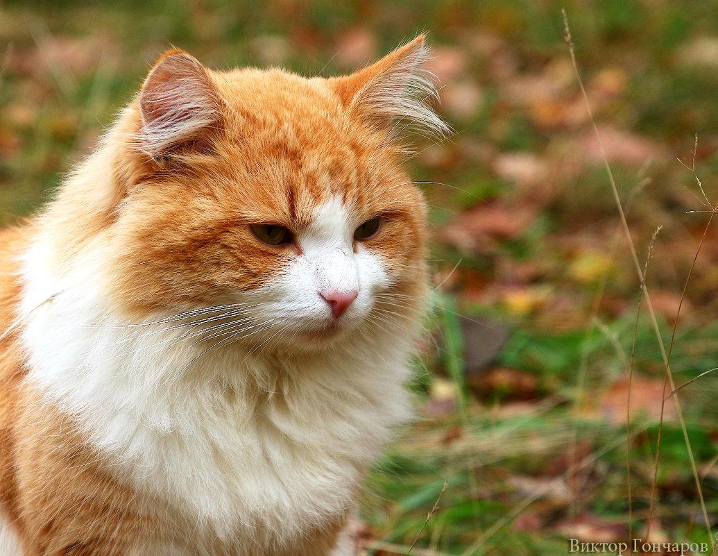 кошка - Laryan1