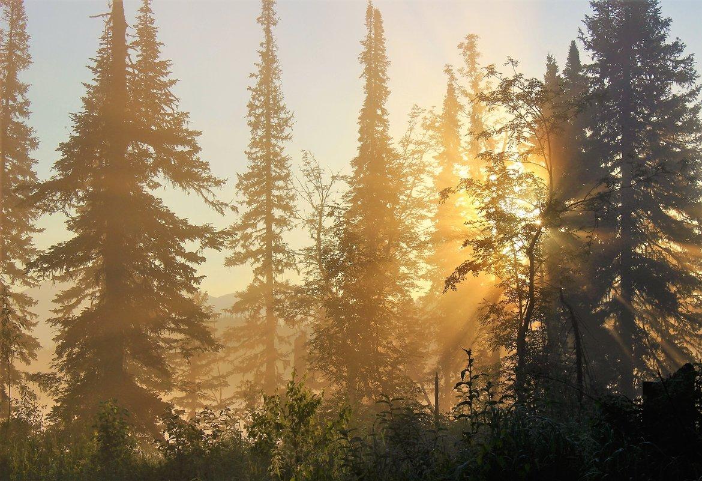 Утро в лесу - Сергей Чиняев