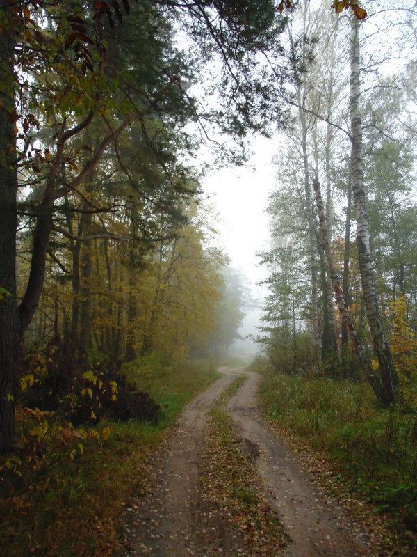 Туман в осеннем лесу. - Людмила Ларина