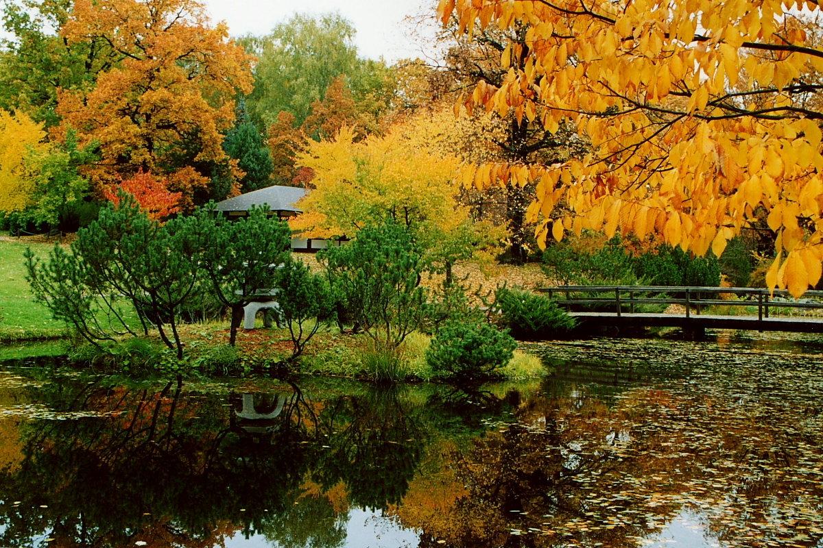 Осень в Японском саду! - Николай Кондаков