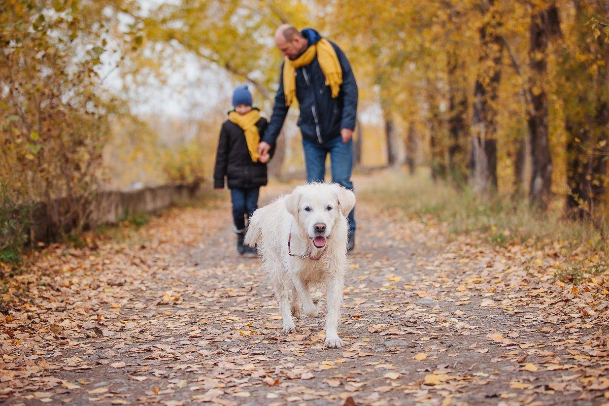 """Результат пошуку зображень за запитом """"собака друг человека"""""""