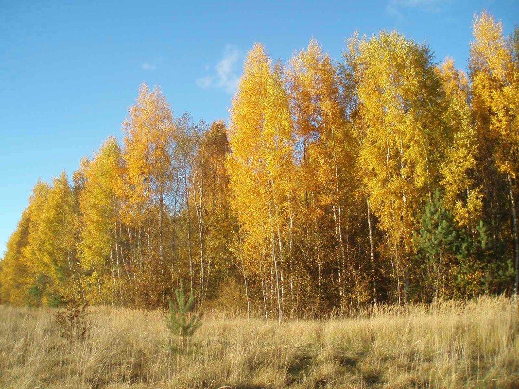 Karsakiškio ruduo / Autumn in Karsakiškis - silvestras gaiziunas gaiziunas