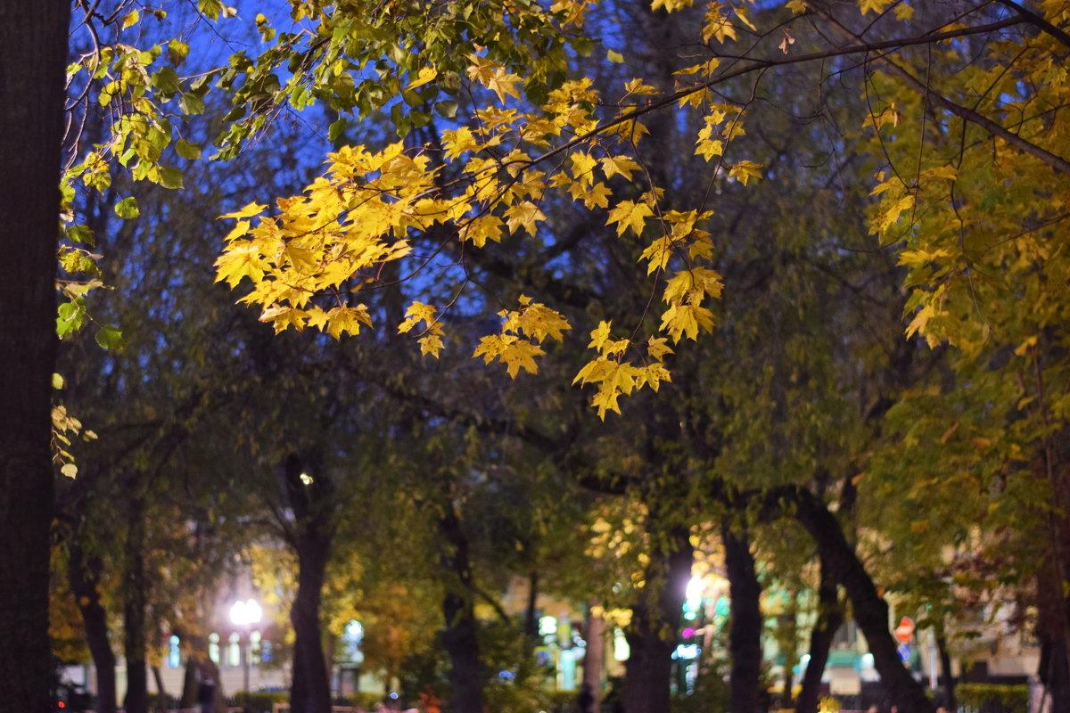 Вечерние кленовые листья. - Татьяна Помогалова