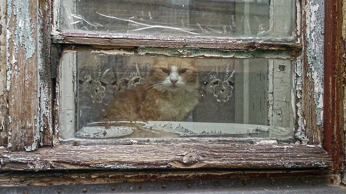 Старый  кот в старом окне - Natali D