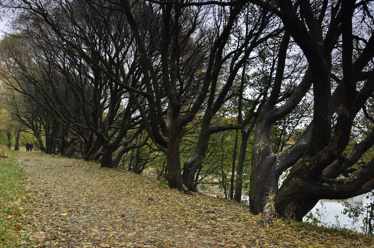 черный лес - елена