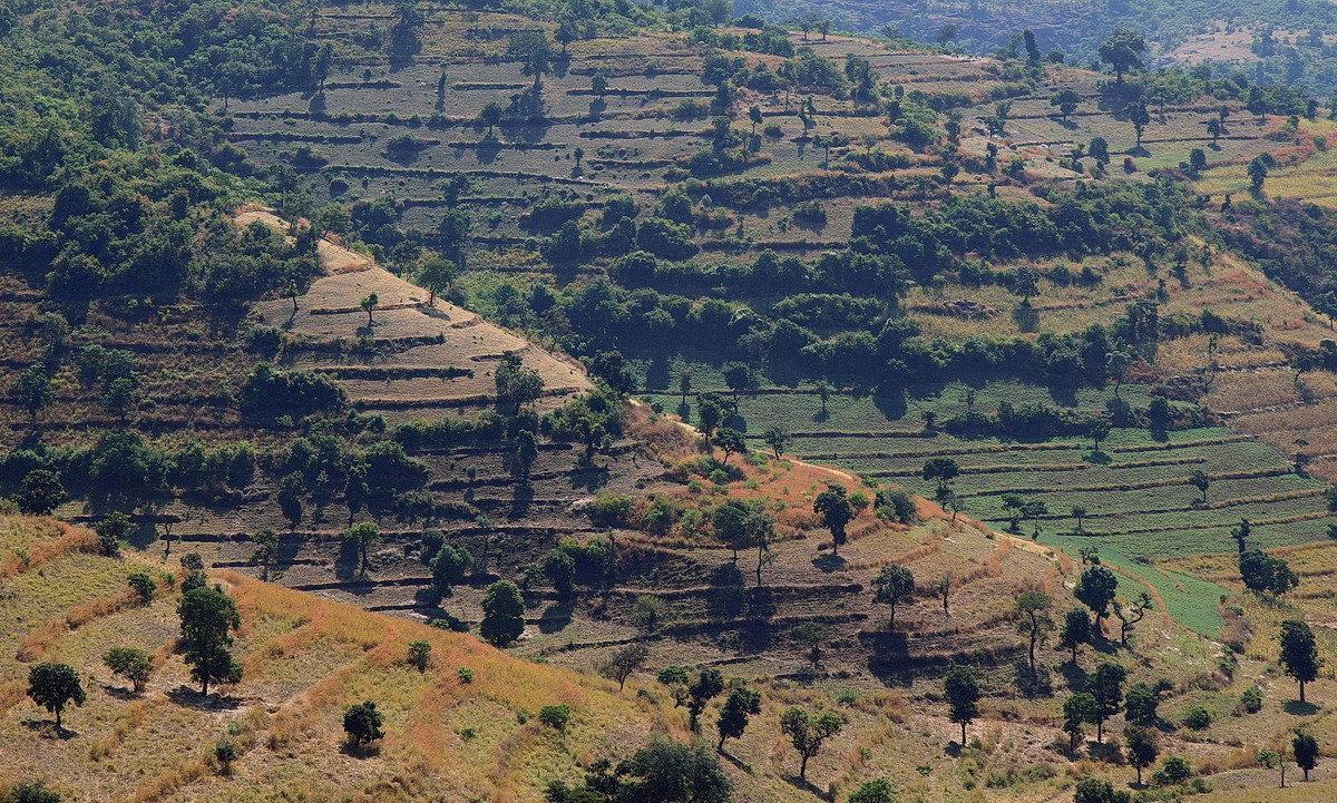 Огороды Эфиопии - Евгений Печенин