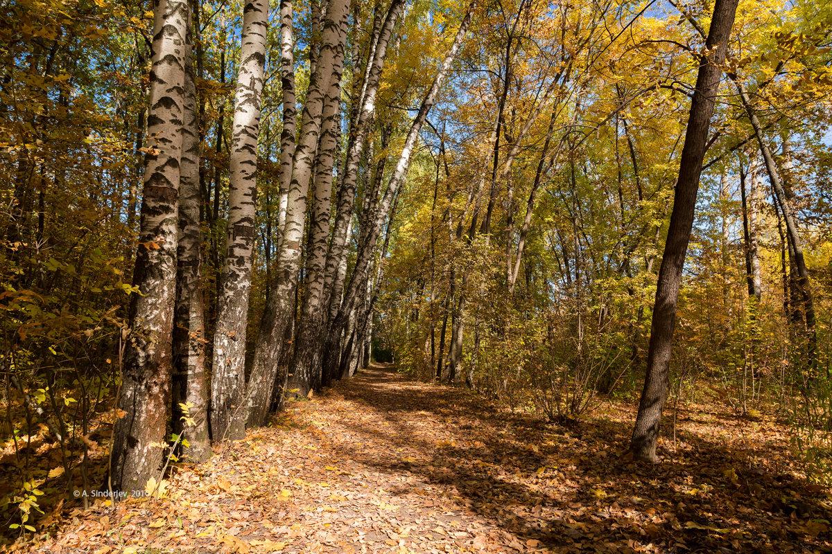 Осенний пейзаж с берёзами - Александр Синдерёв