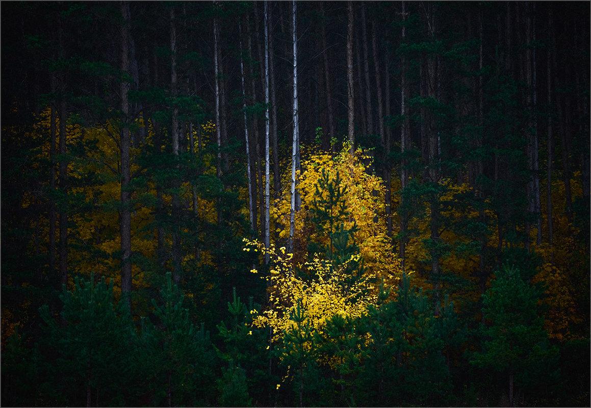 Поселилась в лесу осень... - Влад Никишин