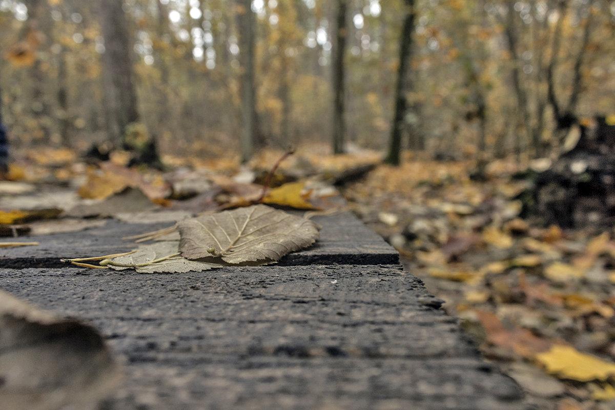 лес и - Геннадий Свистов