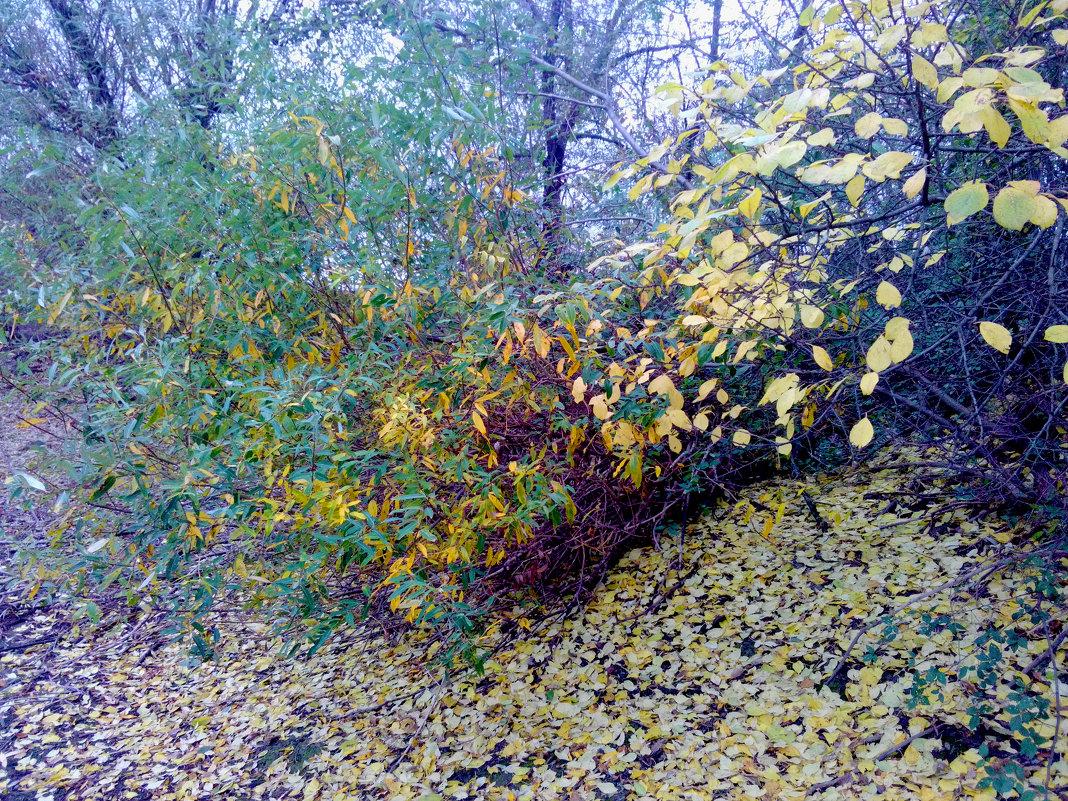 Осенняя пора - Татьяна Королёва