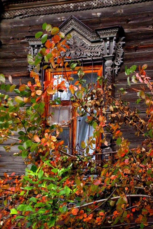 осенние окна - Наталья Сазонова