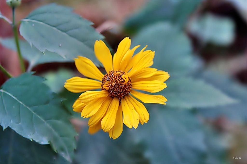 цветок - Аркадий Лаптенко
