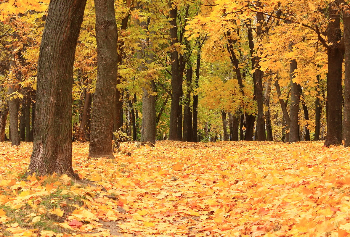 Золото листьев шуршит под ногами - Татьяна Ломтева