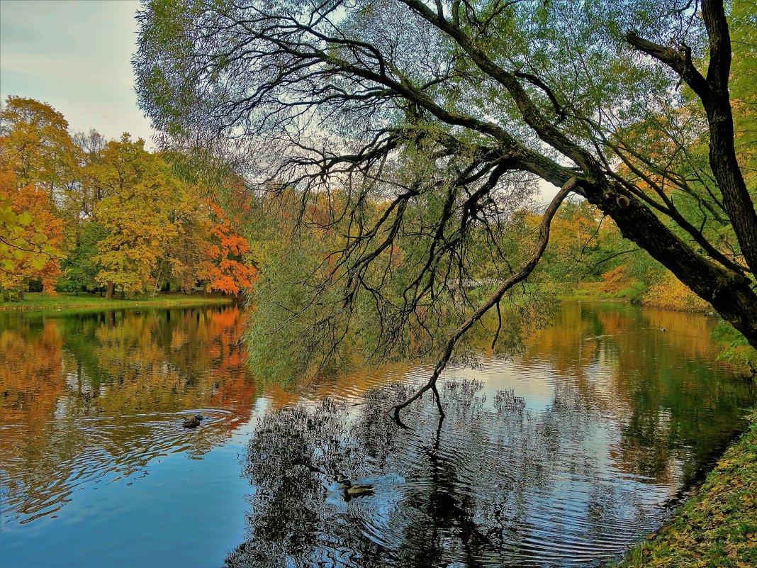 Чарующая осень... - Sergey Gordoff
