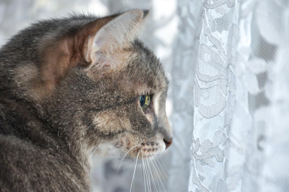 За окном дождь... - Наталья Жукова