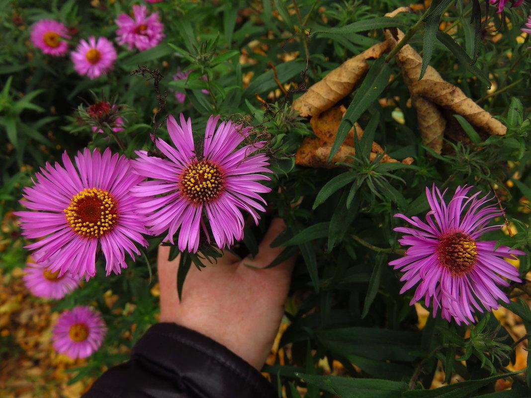 Цветы запоздалые - Андрей Лукьянов