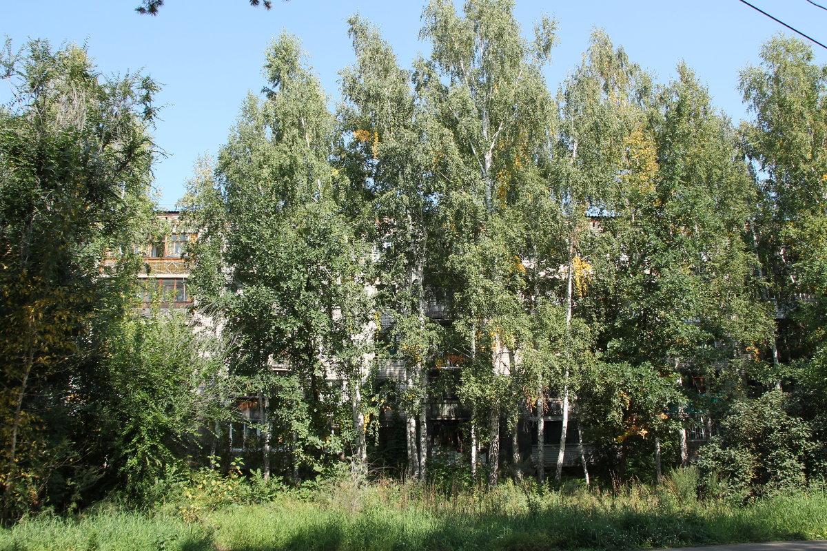 Берёзы перед домом - Олег Афанасьевич Сергеев